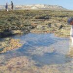 Estudian el origen de los primeros pulperos de la Patagonia