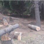 Detectan gran tala de árboles en bosque comunal del barrio Bella Vista con el fin de ocupar tierras